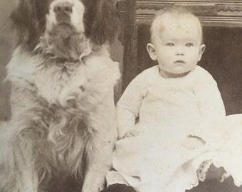 Baby & English Setter Dog Antique Photo by Latham, Bradford, PA