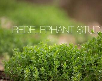 Set of 2 Over the Hedge/ Secret Garden Digital Background/Overlay/Digital Backdrop