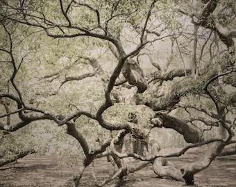 Angel Oak Tree Photo Art, Woodlands Photo, John's Island Old Angel Oak Tree, Charleston South Carolina Tree Photo, Dreamy Oak Tree Photo Art
