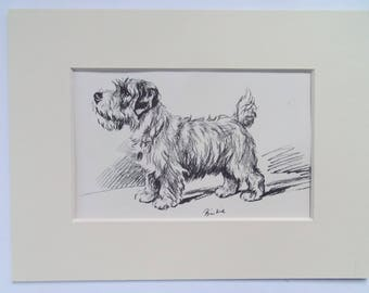 "Sealyham dog print by Lucy Dawson dated 1935 in 6""x8"" mount ready to frame"