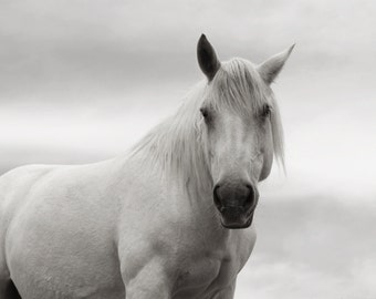 Large Mounted Canvas Wall Decor of  White Horse Photograph