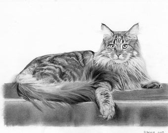 Custom pet portrait- graphite pencil drawing