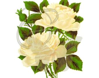 Rose Flower Clip Art Printable Crafting Image Digital Download Botanical