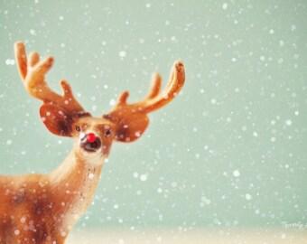 holiday, deer, Christmas, fine art photography