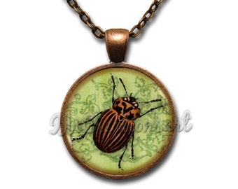 Beetle Bug Insect Black Stripes Glass Dome Pendant or with Chain Link Necklace  AN217
