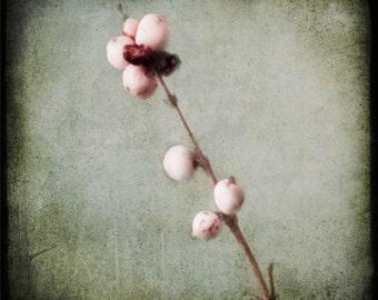 Green White Berry Photograph--Winter White Berries--TTV Fine Art