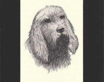 Otterhound Print by C.Francis Wardle - 1935 Vintage Print of Drawing, Mounted with Mat  - Otter Hound Print Otterhound Vintage Dog Print