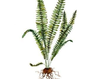 Fern, Watercolor Fern, Fern Print, Fern Illustration, botanical illustration, watercolor leaves, botanical print, watercolor print