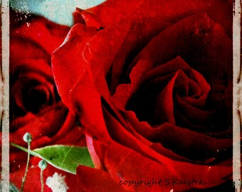 Red Rose Photograph Grunge and Roses Blood Red Gothic Flower Wall Decor Modern Floral Gothic Print 8x8
