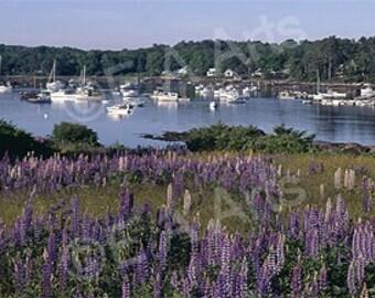 Round Pond Lupine Maine Panoramic Photography Maine Photographer Paul Vose Panoramic Wall Decor
