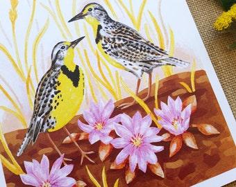 "Western Meadowlark, Bitterroot, Bluebunch Wheatgrass, Montana State Symbols, 8"" x 10"" - Art Print"