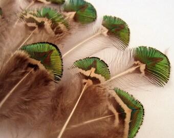 Pfau Federn Gold Körper 10 Handwerk Federn natürliche Federn