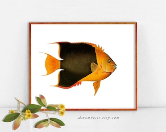 COLORFUL TROPICAL FISH 2- digital image download - large printable antique fish illustration retooled for image transfer - totes, pillows