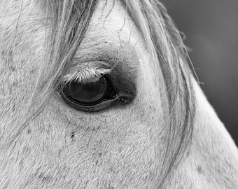 Horse Photography Black and White 8 x 10 Equestrian Print