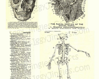 Vintage Image Skull and Bones Collage Sheet Sepia Tone Digital Download for Halloween Crafting and Decor