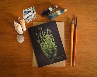 Gut Weed Seaweed Card - A6 greeting card - beautiful coastal art card