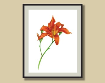 Botanical Art Print from Watercolor Illustration, Plant Drawing, Botanical Print, Garden Art, Home Decor, Orange Lily, 8 x 10 or 11 x 14