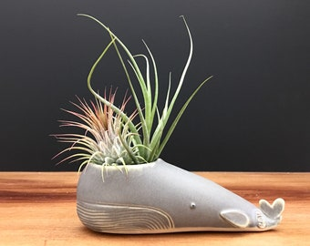 whale vase ONE / whale air plant holder / whale bud vase / antique jade whale / one whale