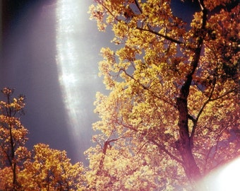 autumn leaves photo, autumn tree photo, sunlight, holga photo, nature photography, dreamy, surreal, fall tree photo, autumn, tree, golden