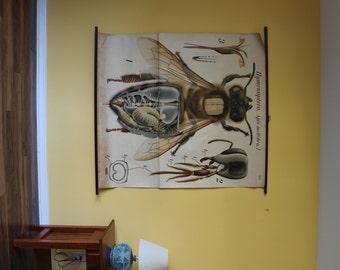 Pfurtscheller Zoology Wall Chart – Chart 13 - Honeybee