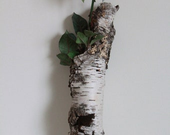 """Natural Birch Bark Sleeve for Crafting, Flower Arranging, Hollowed Naturally by Decay, Beautiful Sleeve of Birch Bark, Betula Bark """"B"""""""