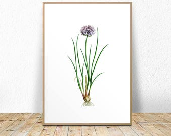 Chives Art Print, Chives Printable, Chives Kitchen Print, Kitchen Illustration, Kitchen Printable, Chives Poster, Instant Download, Drawing