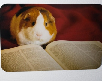 Fridge Magnet: Guinea Pig Reader