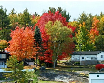 Fall Trees In Muskoka