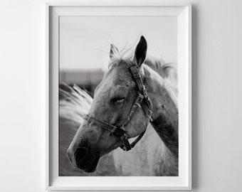 Horse printable Black White horse Horse print Equestrian print Horse poster Horse head print White horse print Horse download Horse art