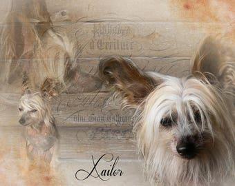Pet Portrait Personalised Collages - Pet Loss