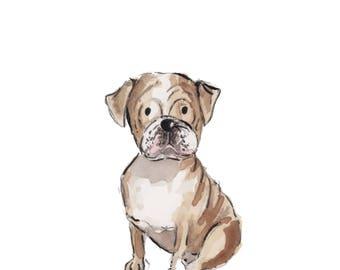 5x7 English Bulldog Print