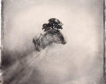 Tree - Tiny Planet, fog, Branches, black & white, sepia, metallic photo