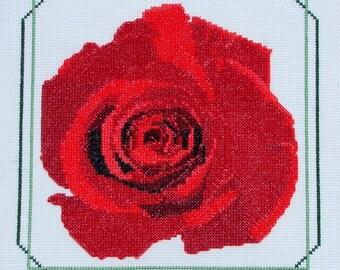 Red Rose--LB02181