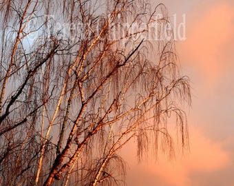 Sunset Photo, Beautiful Tree Photo Print, Orange Glowing Sky, Purple, Red Branches, Autumn Colors, Fall Tones, Brown Hues, Winter Tree Print