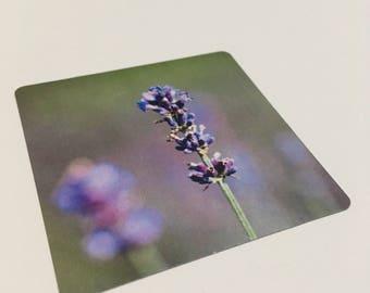 Instagram style fridge magnet - flower magnet - lavender fridge magnet. garden magnet kitchen decor stocking gift
