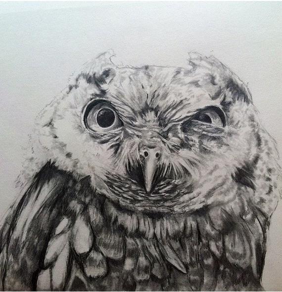 Screech Owl Stink Eye Pencil Drawing 18x24