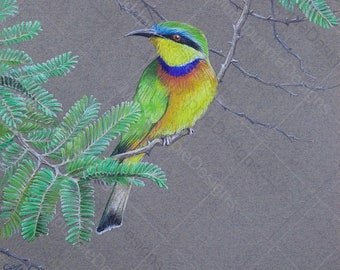 BIRD ARTWORK Realistic blue breasted Bee Eater Chalk Pastel DRAWING yellow lime Green leaves Nature Wall art colorful feathers muddpuppie