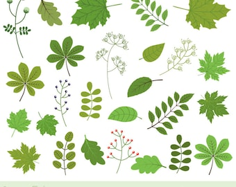 Green leaf clipart, Green foliage clipart, Spring leaf clipart, Oak leaf clip art, chestnut, maple, berry, twig,  Greenery clipart botanical
