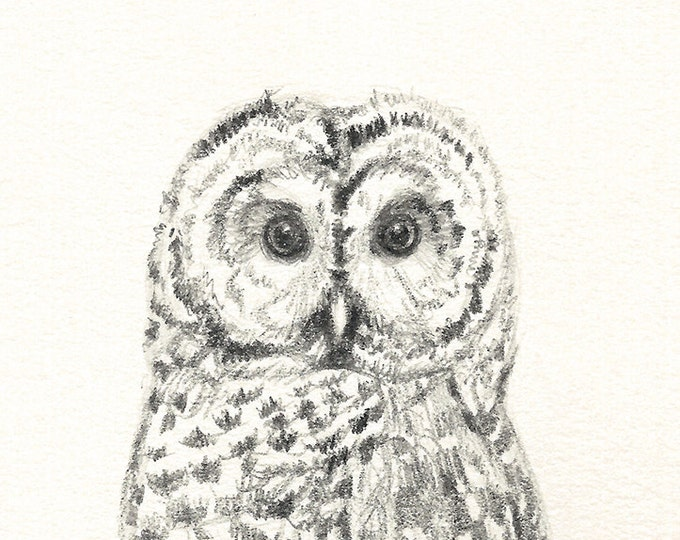 66 Tiny Owl Greeting Card