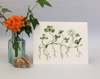 Botanical notecard with watercolor art of white clover and natural history facts on the back. Blank inside for all occasions.