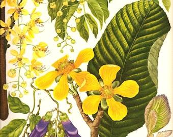 Vintage 1970 Color Art Print Wild Flowers Book PLATE 112 Beautiful Yellow Purple Flowers Green Leaves Indian Laburnum Burma