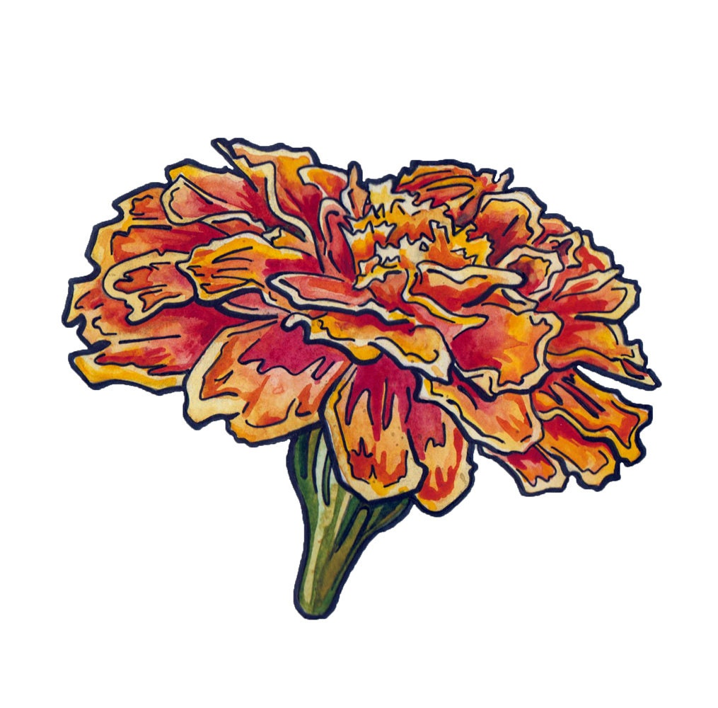 Marigold Painting in Watercolor and Ink - Watercolor Flower Art ...