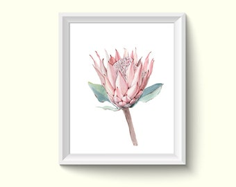 Protea Flower Watercolour Painting Drawing Art Print N41