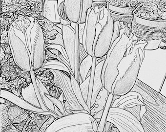 Flowers Coloring Bundle, 5 Adult Coloring Pages, Gray Scale, Printable, Digital Download, Adult coloring, Adult Coloring Book, Stress Relief