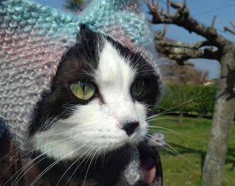 Beanie cat or dog