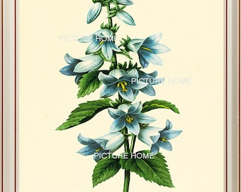 Flower Botanical Print 14 Beautiful 8X10 Antique Redoute Art Room Decoration Wall Art to Frame Blue Flowers Spring Garden Nature