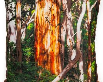 Photo cushion of sunlit karri trees is so Australian. Tall trees catching the sun makes a striking decorative square pillow on shiny satin.
