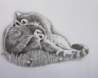 Cuddle Up - Ring Tailed Lemurs - Fine Art  Original Pencil Drawing-Animal Lover - Fine Art - Animal Artist