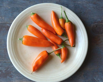 Hot Pepper Seeds, Bulgarian Carrot Pepper, Shipka Pepper, Heirloom Pepper, Open Pollinated Vegetable Seed, Great for Salsa Gardens