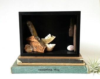 Präparatoren box, Schaukasten, Kunst, Kuriosität Montage, viktorianische Kunst, Steampunk-Kunst, Natur-Kunst, Kunstobjekt, dunkle Kunst, Wohnkultur, Skelett-Knochen-Art